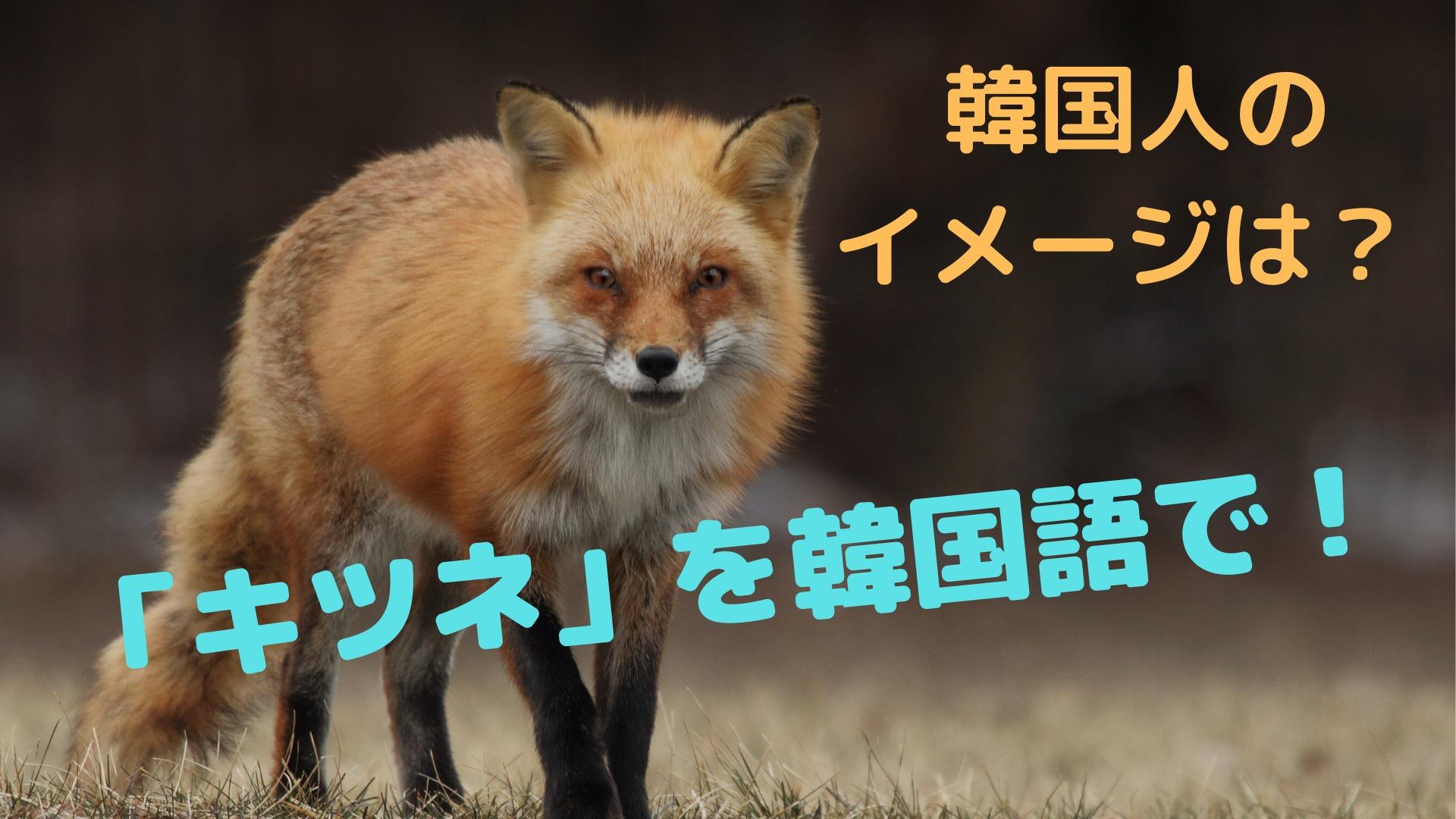 「キツネ」を韓国語で!【韓国人のキツネのイメージは?】