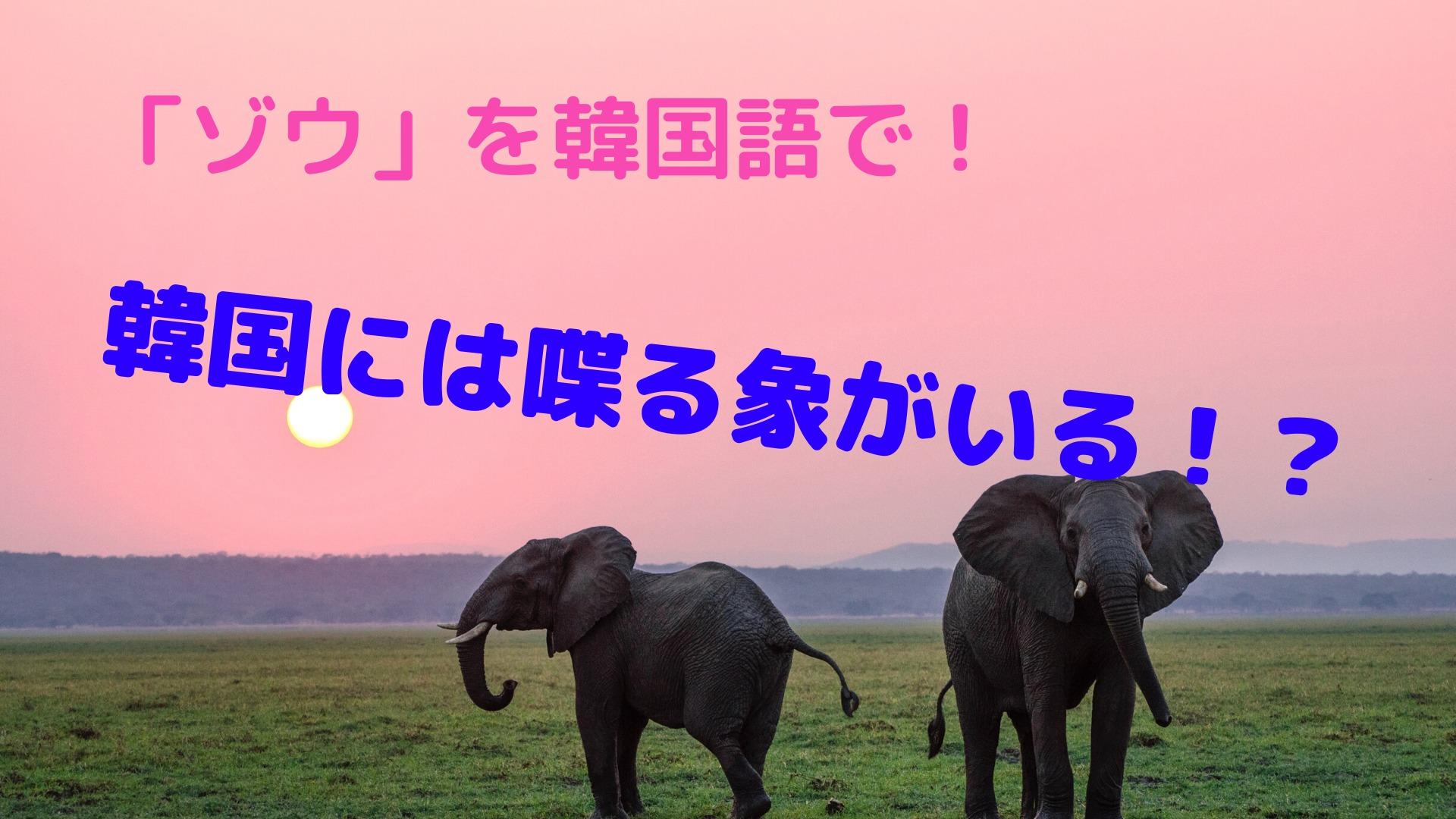 「ゾウ」を韓国語で!【韓国にはしゃべる象がいる!?】