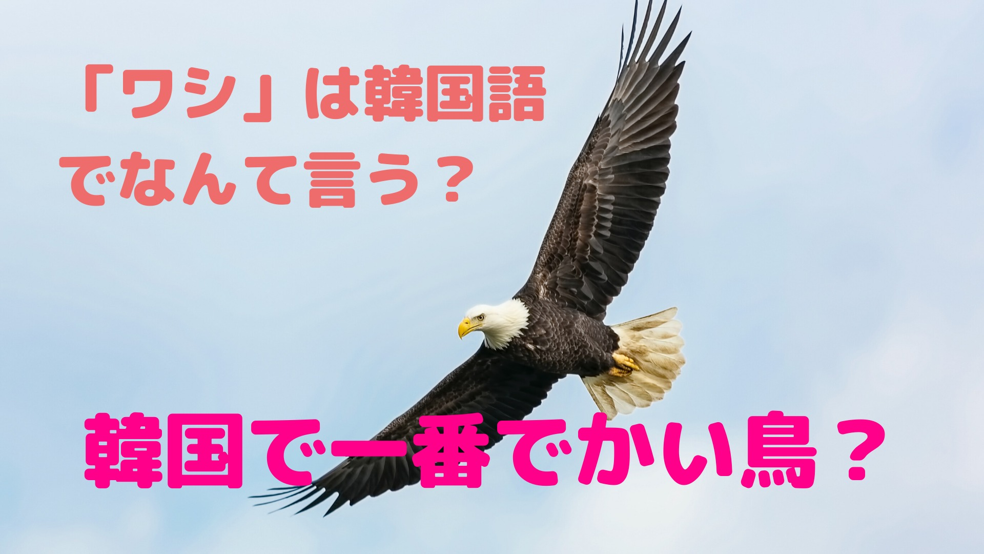 「ワシ」を韓国語でなんて言う?【韓国で一番大きい鳥?】