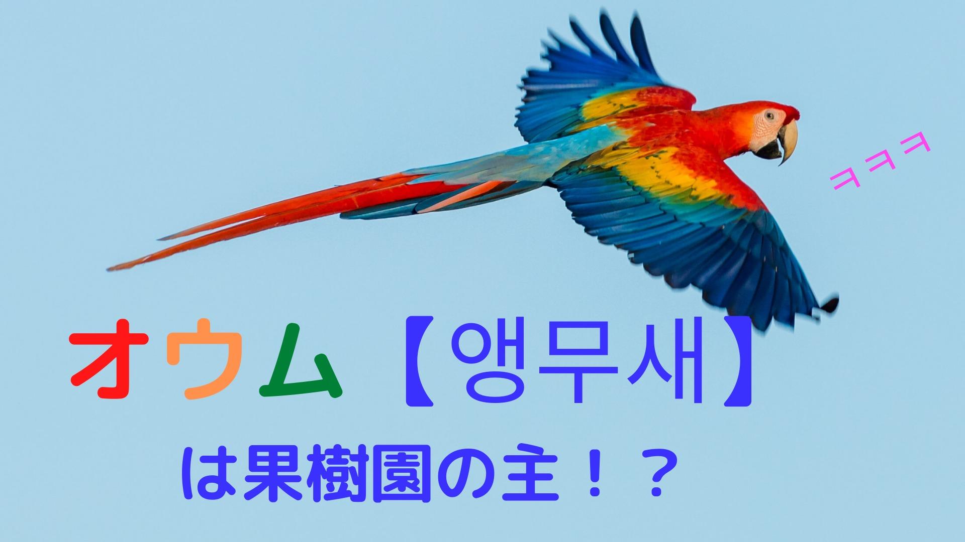 【虫食い韓国語2】オウム ( 앵무새 ) は果樹園の主?