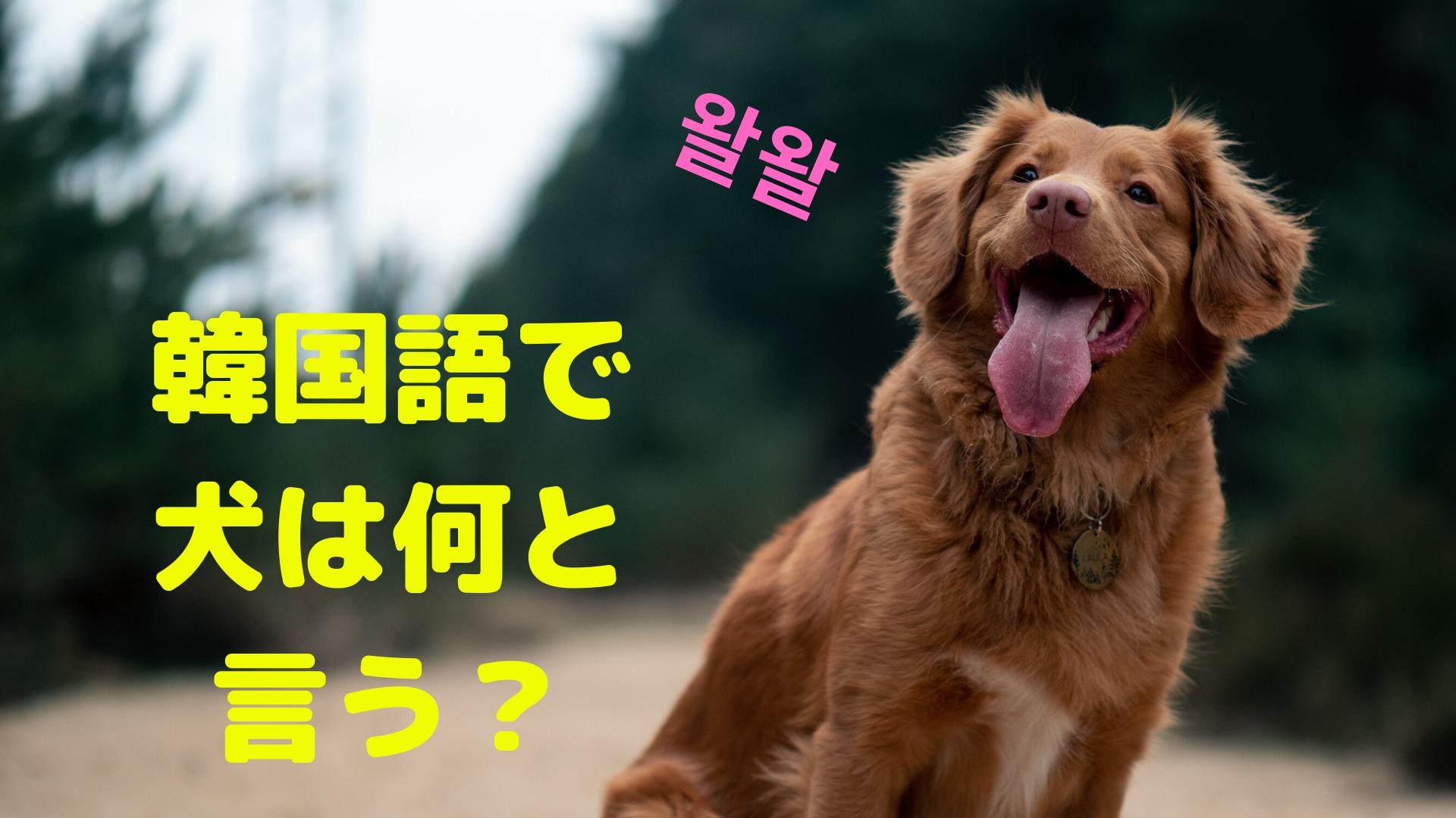 犬は韓国語でなんという?【韓国で最も愛されてるペット】