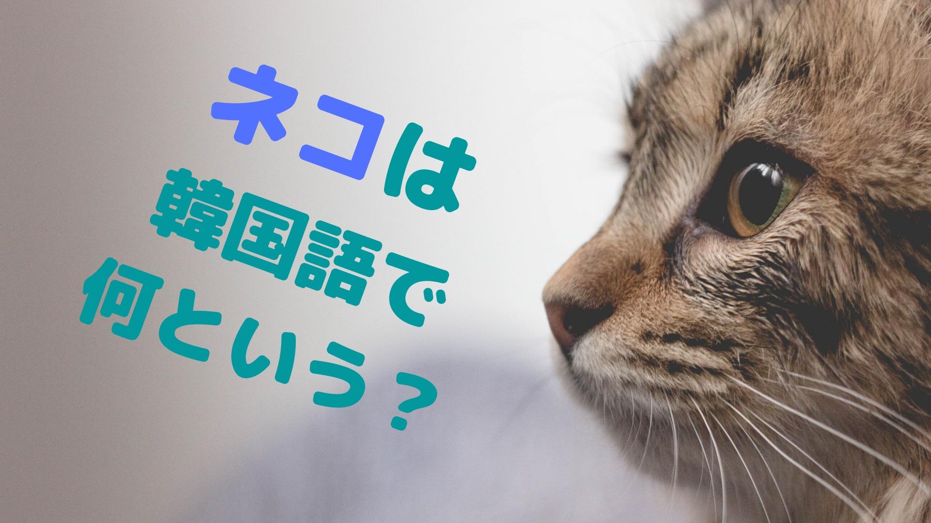 韓国語でネコはなんという?【韓国で人気急上昇】