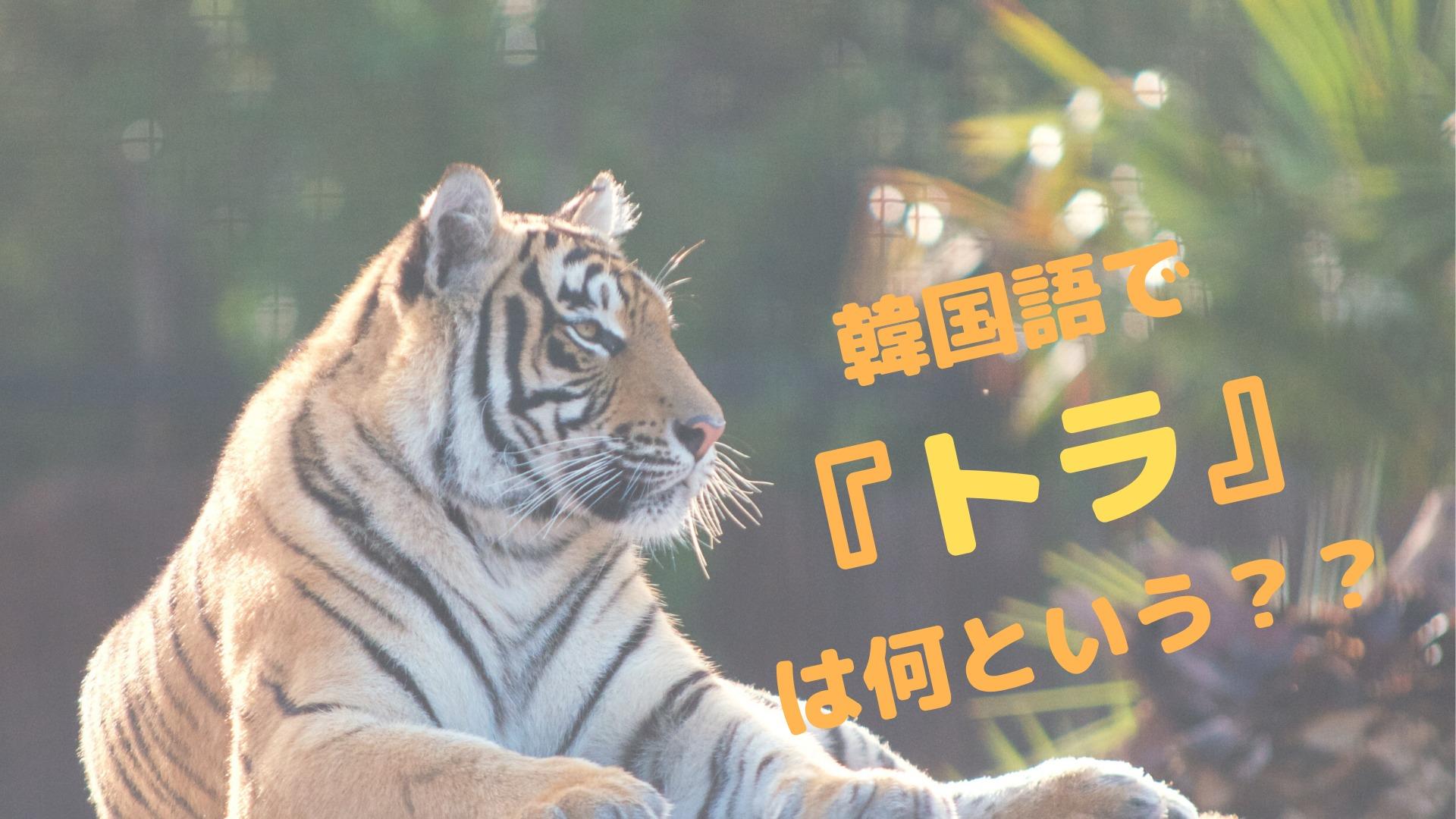 【韓国人が一番好きな動物!?】韓国語でトラは何という?
