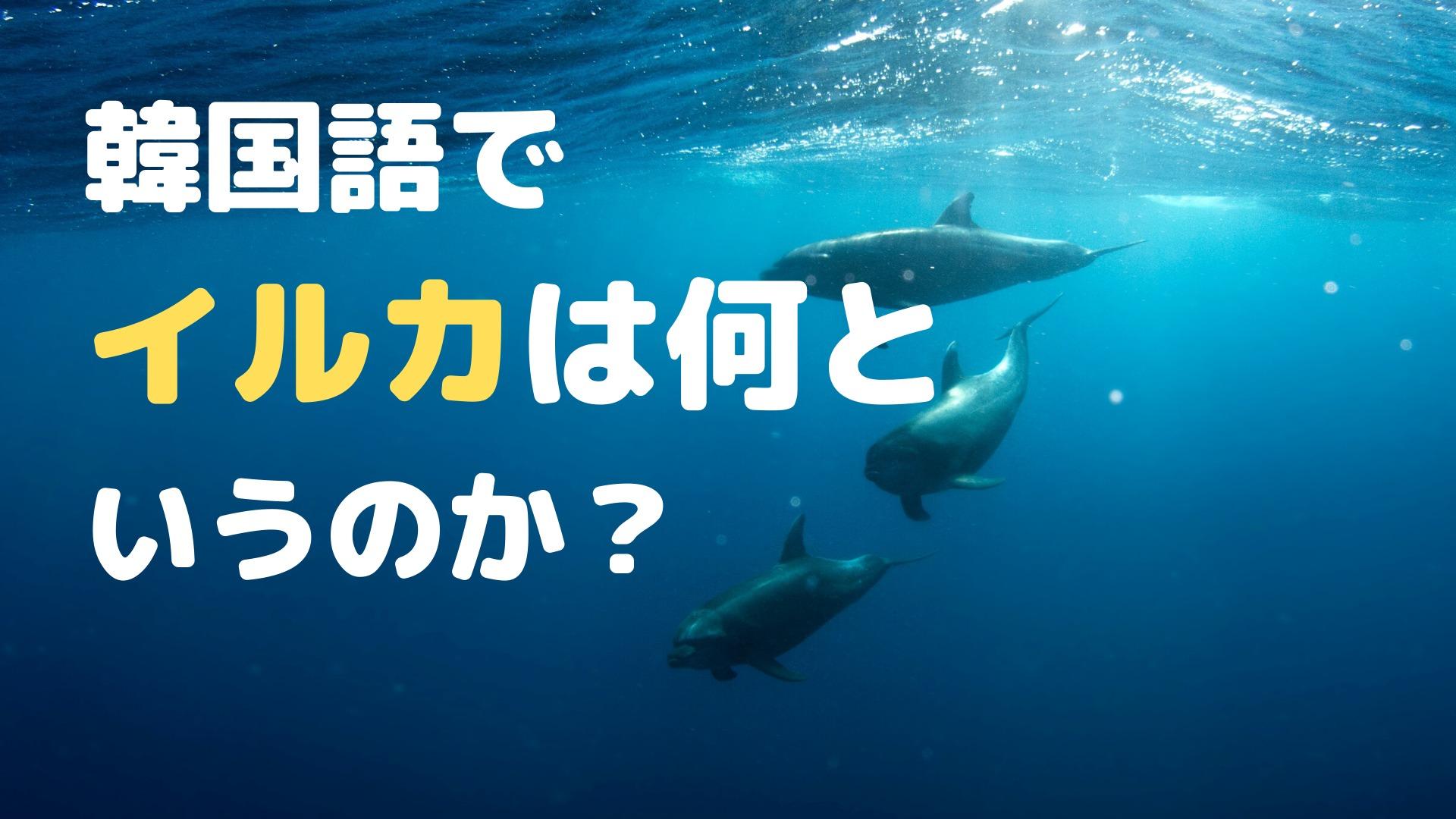 イルカは韓国語で何という?【各部位の名称も】