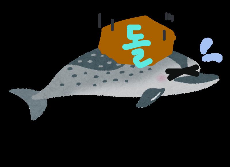 돌고래と고래の違いを説明