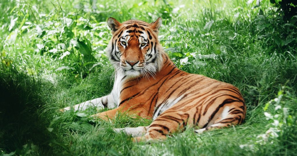 トラ[호랑이]の例文