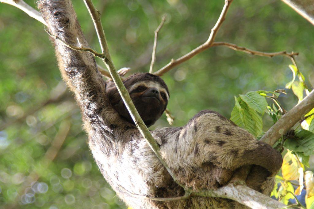 ナマケモノ[나무늘보]はなぜ絶滅しなかった?