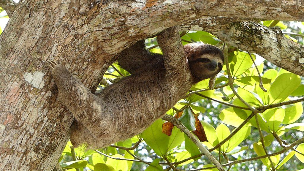 ナマケモノ【나무늘보】の基本情報