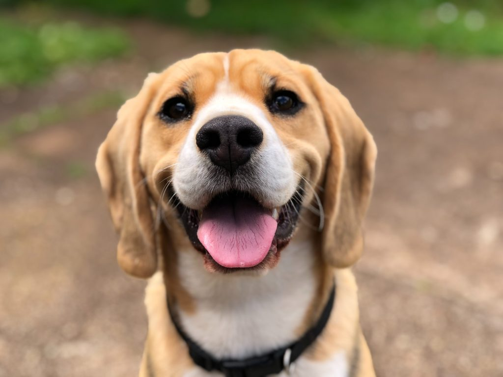 犬[개]の例文