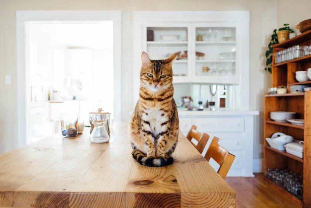 ネコ[고양이]の例文