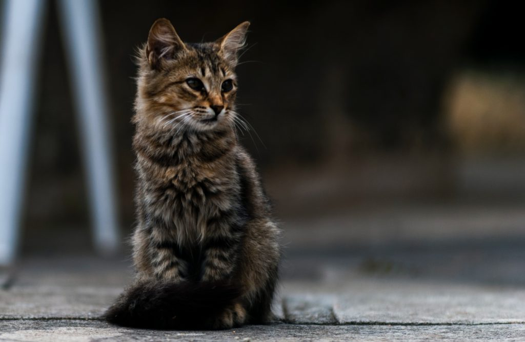 ネコ[고양이]の格言